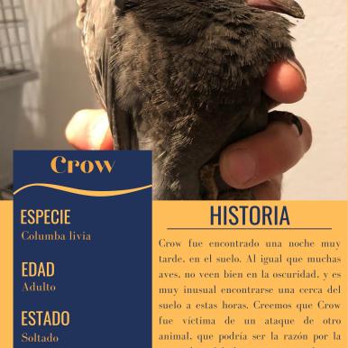 FILE_ Crow